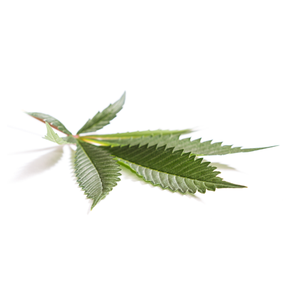 leaf1circletemplate400x400v3