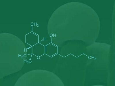 emeraldhealthdirectoryproductimage1