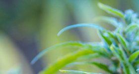 PlantBlue6ImageMagazineImages800X700