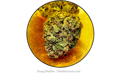 BudContainer1NewsImagesTemplate420wV3.jpg